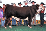 C Game Plan 2040 ET - 2004 Grand Champion Bull at Fort Worth