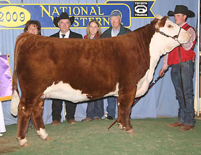C Chanel ET - 2009 National Champion Heifer