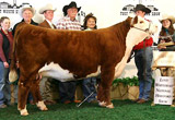 CHANEL as 2009 Fort Worth Champion Heifer