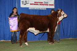Champion Junior Bull Calf - Click to enlarge