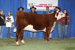 Grand Champion Female - Click to enlarge