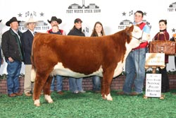 Grand Champion Heifer - CLICK to enlarge