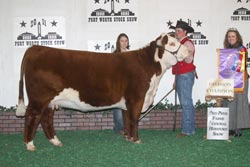 Champion Junior Yearling Heifer - Click to enlarge