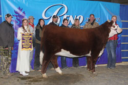 Reserve Champion Horned Spring Yearling Heifer - Click to enlarge