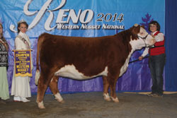 Res Champion Horned Jr Yearling Female - Click to enlarge
