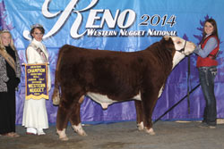 Res Champion Horned Jr Bull Calf - Click to enlarge