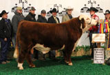 C Stockman 2059 ET - Click to view results