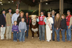 Supreme Champion Hereford - Click to enlarge