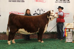 Champion Junior Yearling Female - Click to enlarge