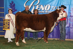Reserve Champion Spring Yearling Female - Click to enlarge
