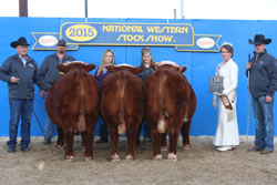 Pen of Bulls Class Winner - Click to enlarge