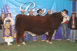 Grand Champion Horned Bull - Click to enlarge