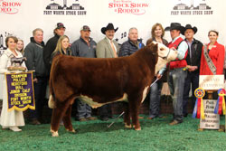 Grand Champion Polled Bull - Click to enlarge