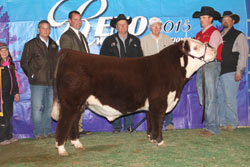 Reserve Grand Champion Polled Bull - Click to enlarge