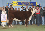 Reserve Grand Champion Female - Click to view results