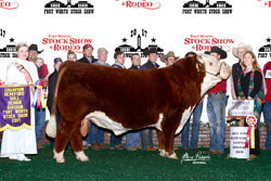 Reserve Grand Champion Horned Bull - click to enlarge