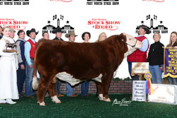 Grand Champion Polled Female - Click to enlarge
